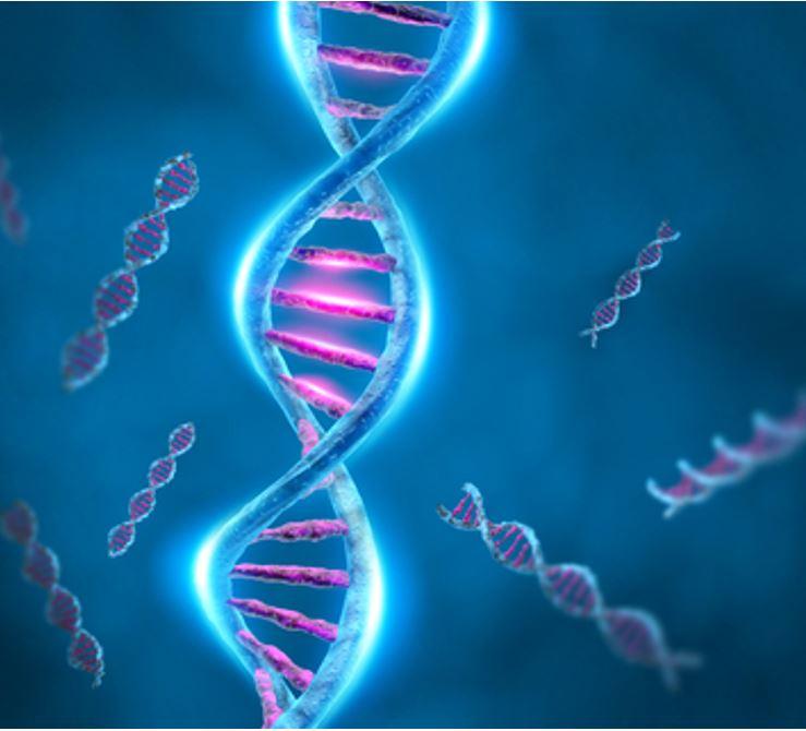 Alport syndrome Genetics: Understanding Specific Gene Mutations