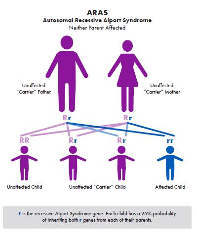 Alport syndrome Genetics 101: ARAS and ADAS